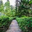 Walk way Path Through The Garden — Stock Photo