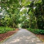 Walk way Path Through The Garden — Stock Photo #27979589
