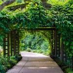 Walk way Path Through The Garden — Stock Photo #28002097