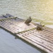 Cormorants and bamboo raft — Stock Photo #34661355