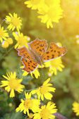 Butterfly on the flower — Stockfoto
