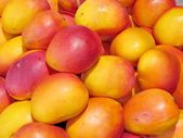 Tel Aviv beautiful mango 2012 — Stock Photo