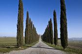Roads of Tuscany (Val d'orcia Italy) — Stockfoto