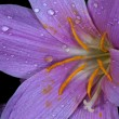 Stock Photo: Macro flower