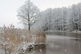 Winter-3 — Stock Photo