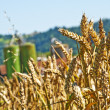 Wheat with silo in background — Stock Photo #12068351