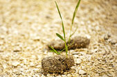 Dung with seedling — Stock Photo