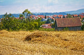 Wheat harvest with panoramic view — Stock Photo