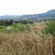 Stock Video: Wheat fiel with panoramic view