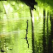 Stock Video: Creek with fern