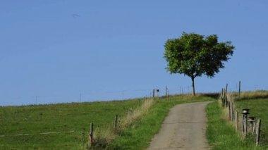 国の田園風景 — ストックビデオ