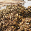 Dung heap - Stock Photo