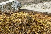 Dung heap — Stock Photo