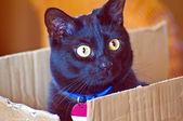 Tomcat — Foto Stock