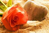 Rose sur une plage avec coeur — Photo