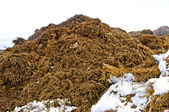Dung hill in snow — Stock Photo