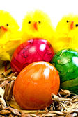 Easter basket with painted eggs and biddies — Stock Photo