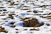 Acre with snow — Stock Photo