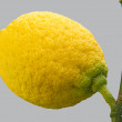 Citron at a tree — Stock Photo