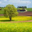Wind wheel in a rural environment — Stock Photo