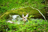 Deer hidden in a forest — Stock Photo