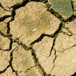 Dry earth — Stock Photo #27619441