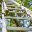 Ladder at a fruit tree — Stock Photo