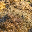 Dung hill — Stock Photo