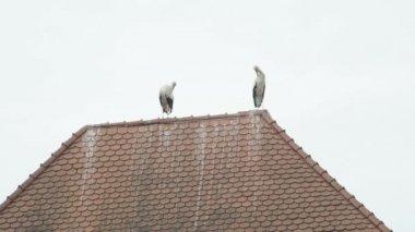 屋根の上のコウノトリ — ストックビデオ