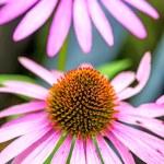 kužel květina, echinacea purpurea — Stock fotografie