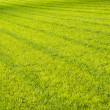 Stock Photo: Fresh cut sports ground