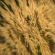Stock Photo: Grass in wind and backlight