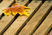 Leaf on a garden chair — Stock Photo
