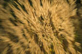 Grass in wind and backlight — Stock Photo