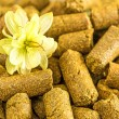 Hops pellets — Stock Photo #33028007