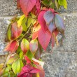 Autumnal painted leaves on a concrete wall — Stock Photo
