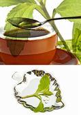 Stevia rebaudiana, support for sugar — Stock Photo