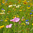 Flowers on a meadow — Stock Photo #35396943