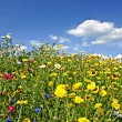 Flowers on a meadow — Stock Photo