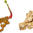 Galangal and ginger — Stock Photo