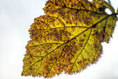 Leaf with ice crystals — Stock Photo