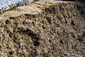 Silage fodder — Stock Photo