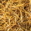 Straw — Stock Photo