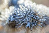 Burdock with ice crystals — Stock Photo