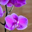 Orchid bloom — Stock Photo #38346703