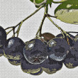 Black choke berry — Stock Photo #39262341