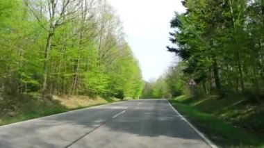 German forest in spring, driving on a road — ストックビデオ