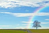 Bald tree with way and rainbow — Stock Photo
