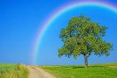Tree on a way with a rainbow — Stock Photo