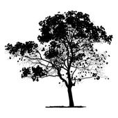 Vector drawing of the tree - detailed vector — Stock Vector